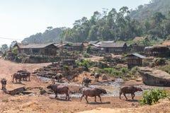 Villaggio di minoranza etnica con i bufallos dell'acqua nel Laos Immagini Stock