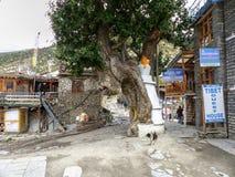 Villaggio di Ngawal Fotografia Stock Libera da Diritti