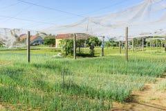 Villaggio di Tra Que, provincia di Quang Nam, Vietnam Immagini Stock