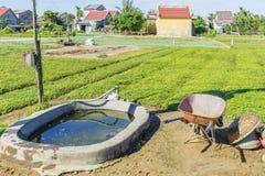 Villaggio di Tra Que, provincia di Quang Nam, Vietnam Fotografia Stock Libera da Diritti