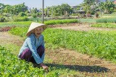 Villaggio di Tra Que, provincia di Quang Nam, Vietnam Immagini Stock Libere da Diritti