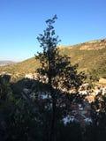 Villaggio e montagne dietro un albero sottile fotografie stock