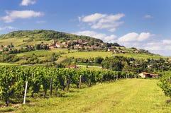 Villaggio e vigna francesi Immagine Stock Libera da Diritti