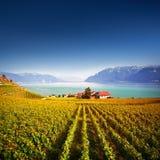 Villaggio e vigne in Lavaux Immagine Stock Libera da Diritti