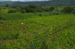 Villaggio indiano verde e prosperoso Fotografie Stock
