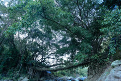 Villaggio Indonesia del ponte della radice Fotografie Stock