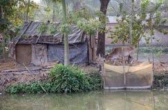 Villaggio Kumrokhali, India del bengalese Fotografia Stock