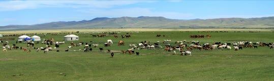 Villaggio Mongolia di Yurt fotografie stock libere da diritti