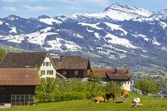 Villaggio nelle alpi svizzere con una piccola azienda agricola Immagini Stock Libere da Diritti