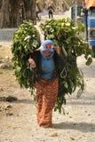 Villaggio nepalese Una donna porta i rami verdi per alimentare il bestiame Immagine Stock