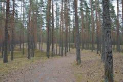 Villaggio russo Fotografie Stock