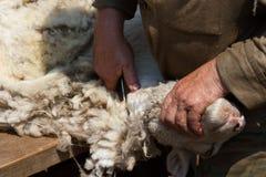 Villaggio siberiano disponibile di forbici di tosatura delle pecore Immagine Stock
