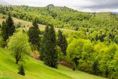 Villaggio sul prato del pendio di collina con la foresta in montagna Fotografia Stock