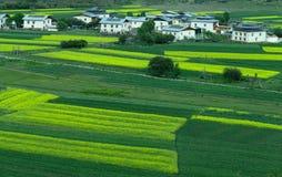 Villaggio tibetano in primavera Fotografia Stock Libera da Diritti