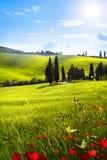 Villaggio in Toscana; Paesaggio della campagna dell'Italia con il papavero rosso f immagini stock libere da diritti