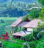 Villaggio tradizionale con il giacimento del riso in giungla Fotografia Stock