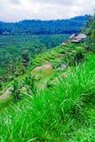 Villaggio tradizionale con il giacimento del riso in giungla Immagine Stock Libera da Diritti
