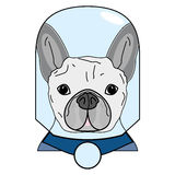 Villain symbol with glass globe, cape in gray and blue as French bulldog character  on white background Stock Images