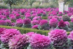 Villandry gardens Royalty Free Stock Photo