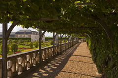 Villandry vines Stock Photos
