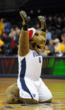 Villanova University Mascot - Wildcats Royalty Free Stock Photography