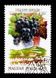 Villany Siklos, serie ungherese di regioni del vino, circa 1990 Fotografia Stock