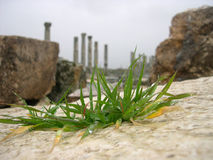 Ville antique d'Apamea, Syrie Photo stock