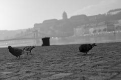 Ville Budapest d'automne photographie stock libre de droits