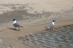 Ville 26 d'océan Photos libres de droits