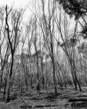 Ville de 1770, Australie Photographie stock