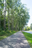 Ville de forêt Images libres de droits