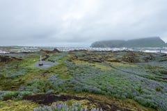Ville de Heimaey, îles de Westman, Islande Image stock