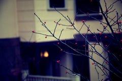 Ville de New Haven Photos libres de droits