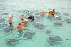 Ville de pastenague, Grand Cayman Photos libres de droits