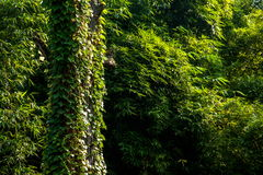 Ville est de station thermale de Chongqing City, environnement de temple de temple de Baisha image libre de droits