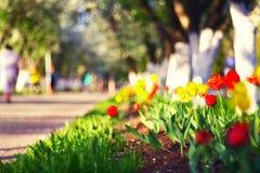 Ville rouge de tulipes au printemps Photo stock