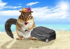 Villeggiante divertente, tamia animale con la valigia alla spiaggia Immagini Stock