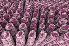Villi of small intestine Stock Image