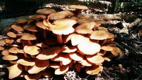 Villiage del fungo immagini stock libere da diritti