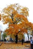 Vilnius city autumn view Royalty Free Stock Photography