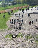 VILNIUS, LITHUANIA - apr 29, 2016: panoramic view of city centre on blossom time in Vilnius, Lithuania. Popular cherry blossom sak Royalty Free Stock Images