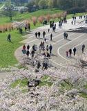 VILNIUS, LITUÂNIA - 29 de abril de 2016: vista panorâmica do centro de cidade no tempo da flor em Vilnius, Lituânia Sak popular d Imagens de Stock Royalty Free