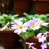 Vilot little flowers Stock Photo