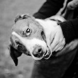 Vilsekommet djur förföljer Arkivfoto