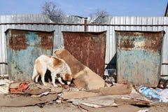 Vilsekommet djur förföljer Royaltyfri Foto