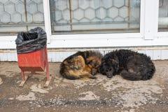 Vilsekommet djurhundkapplöpning Arkivbild