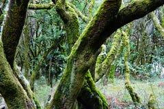 Vilseledande mystisk skog i den LaGomera ön royaltyfri foto