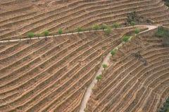 Vin de Porto Image libre de droits