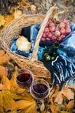 Vin, druvor och exponeringsglas royaltyfria bilder