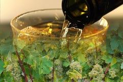 Vin et fond de vignes images stock